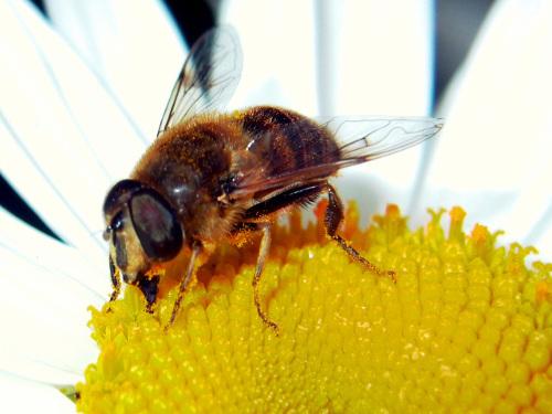 Méhész tanfolyamok