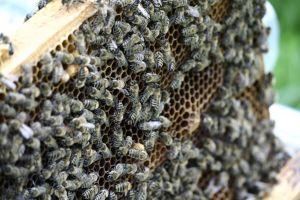 OKJ-s méhész tanfolyam
